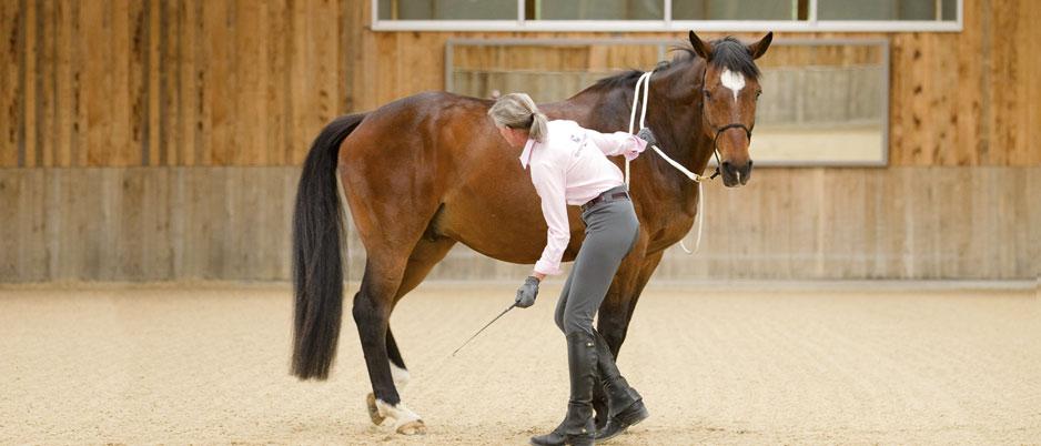 3339705_Christiane_Schwahlen_Natural_Horsemanship