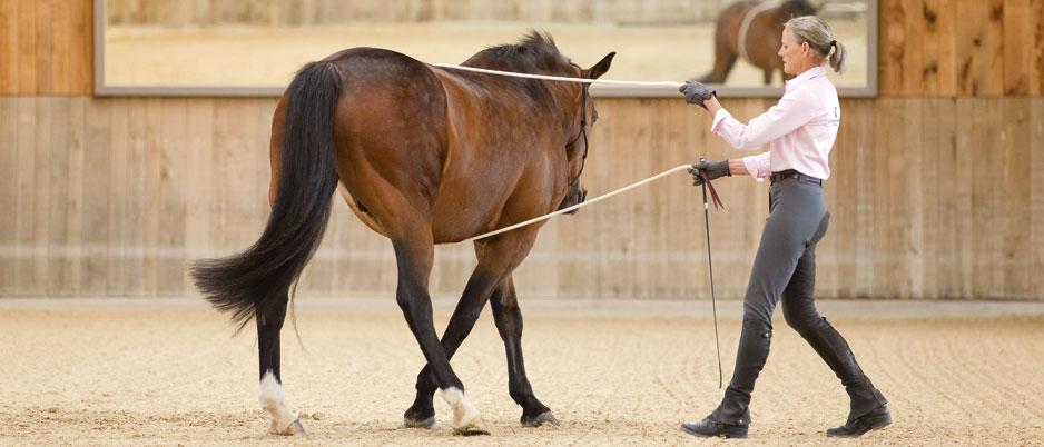 3339942_Christiane_Schwahlen_Natural_Horsemanship1