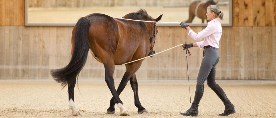 3339942_Christiane_Schwahlen_Natural_Horsemanship2