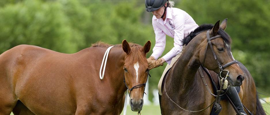 4446885_Christiane_Schwahlen_Natural_Horsemanship