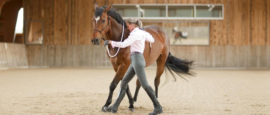 4447464_Christiane_Schwahlen_Natural_Horsemanship