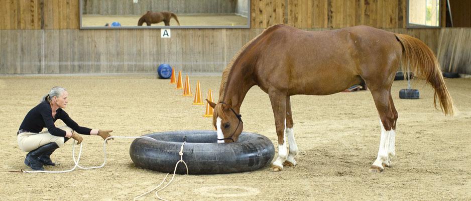 5558900_Christiane_Schwahlen_Natural_Horsemanship
