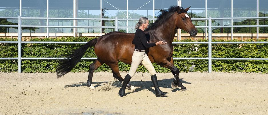 ASC5356_Christiane_Schwahlen_Natural_Horsemanship1
