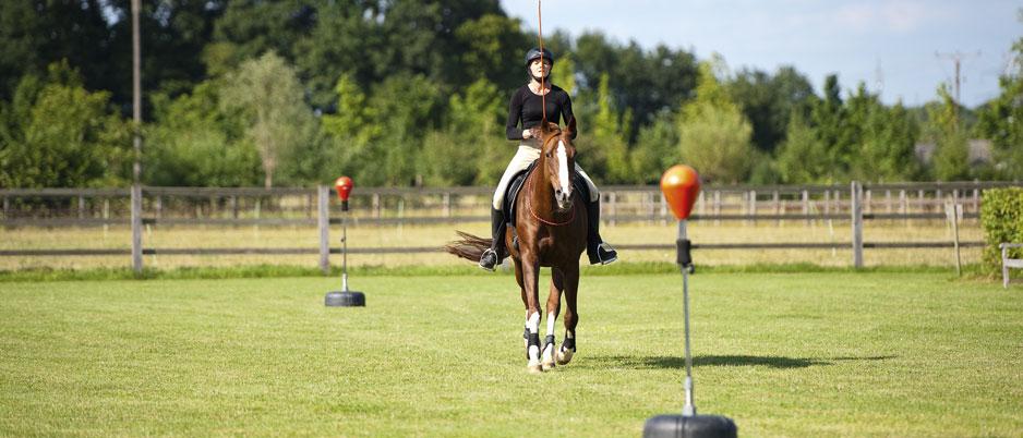 ASC8107_Christiane_Schwahlen_Natural_Horsemanship
