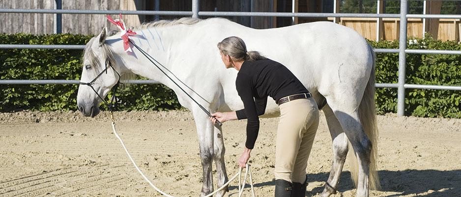 ASC8940_Christiane_Schwahlen_Natural_Horsemanship