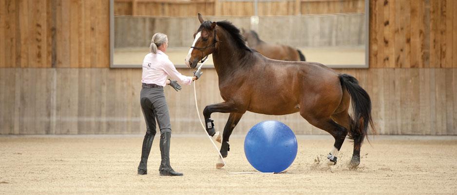 DSC2411_Christiane_Schwahlen_Natural_Horsemanship