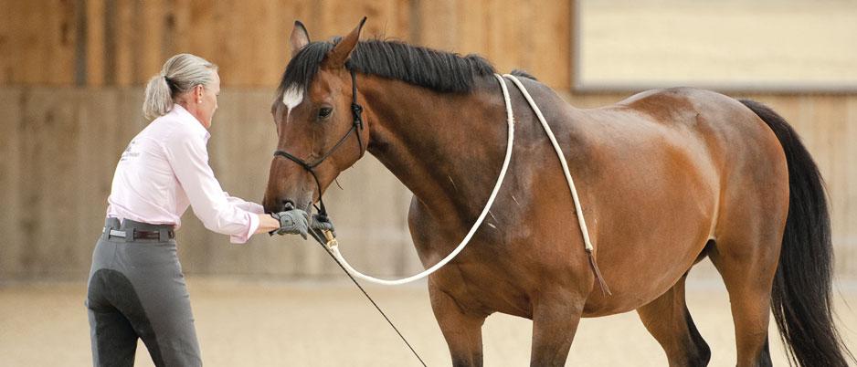 DSC3037_Christiane_Schwahlen_Natural_Horsemanship