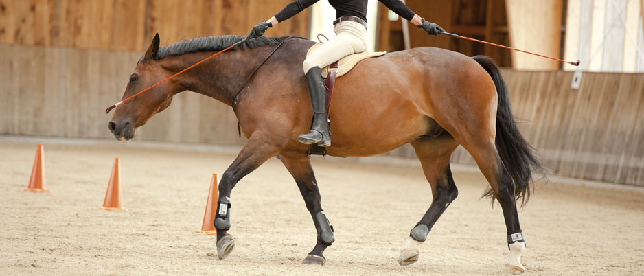 DSC4104_Christiane_Schwahlen_Natural_Horsemanship