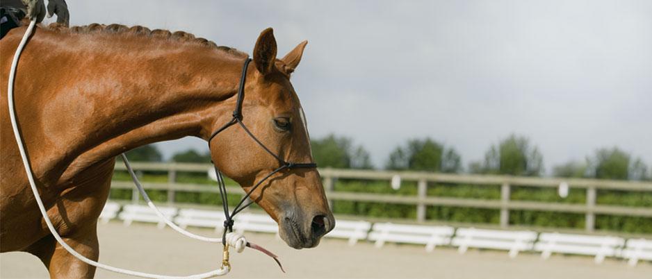 d0363_ba_Christiane_Schwahlen_Natural_Horsemanship