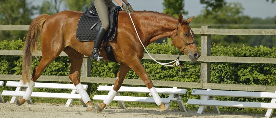 d0408_Christiane_Schwahlen_Natural_Horsemanship