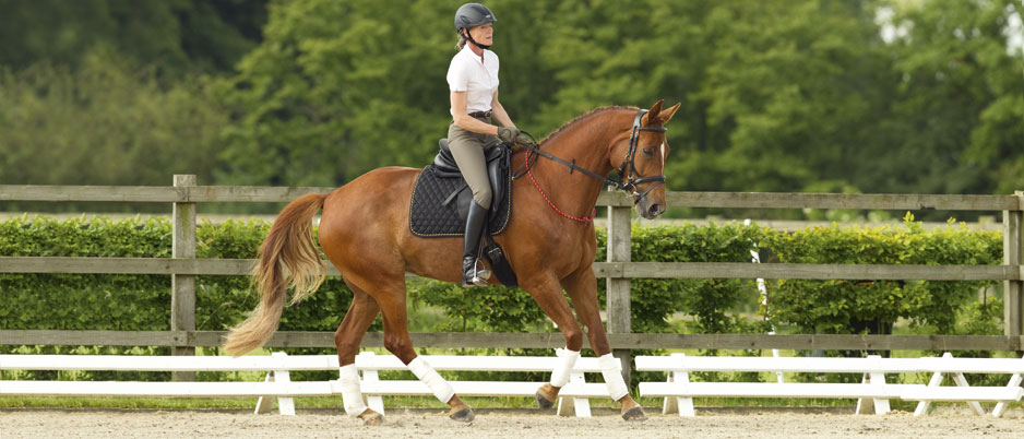 d0471_Christiane_Schwahlen_Natural_Horsemanship
