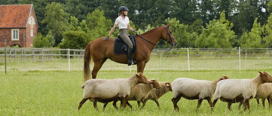 d1110_Christiane_Schwahlen_Natural_Horsemanship