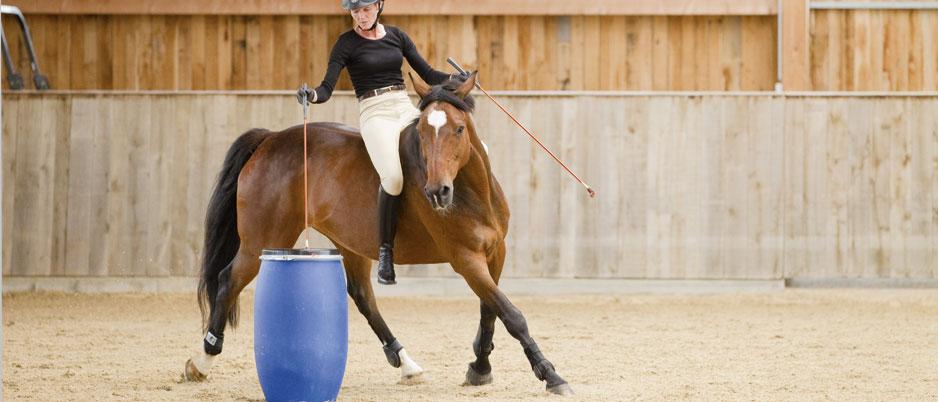d1635_Christiane_Schwahlen_Natural_Horsemanship