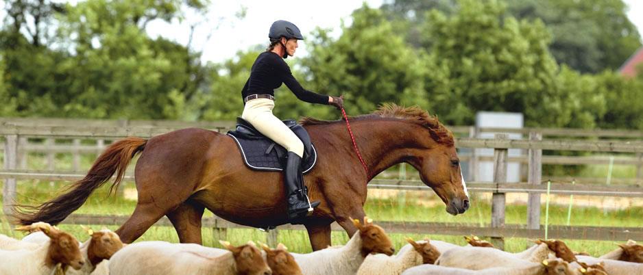 d3455_Christiane_Schwahlen_Natural_Horsemanship3